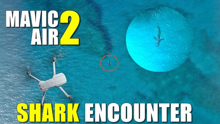 DJI Mavic Air 2 SHARK ENCOUNTER – It's Heading for the beach! –  MAUI Hawaii